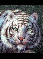 Profilbild von weisser.tiger