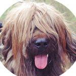 Profilbild von Dabbes