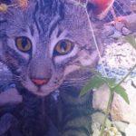 Profilbild von Libertine